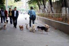 Der alte Mann mit seinen Hunden Lizenzfreies Stockfoto