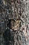 Der alte schroffe Baumstamm mit einem Messer Stockfoto
