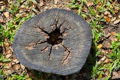 Der alte Stumpf wird mit Gras und Niederlassungen für einen langen Tim bedeckt Lizenzfreie Stockfotos