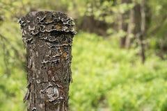 Der alte Stumpf wird mit Moos bedeckt Lizenzfreie Stockfotos