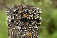 Der alte Stumpf wird mit Moos bedeckt Lizenzfreies Stockbild
