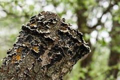 Der alte Stumpf wird mit Moos bedeckt Stockbild