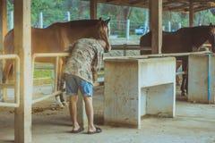 Der alte Trainer kümmern sich um seinem Pferd, nachdem er in a ausgebildet worden ist lizenzfreie stockfotografie