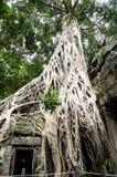 Der alte und große Baum Stockbild