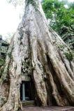 Der alte und große Baum Lizenzfreie Stockfotografie