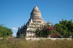 Der alte verlassene buddhistische Tempel in den blühenden Dickichten Bagan, Myanmar Lizenzfreie Stockfotografie