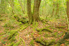 Der alte Wald Lizenzfreie Stockfotos