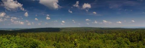 Der alte Wald des Vogelsberg Lizenzfreie Stockfotos