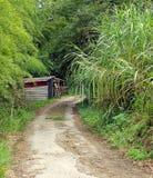 Der alte Waldweg Lizenzfreie Stockfotos