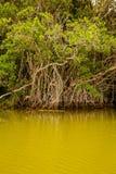 Der Amazonas stockfotografie