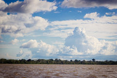 Der Amazonas-Dschungel mit erstaunlichem Himmel und Wolken Stockbild