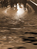 Der AmphibieSepia Stockbild