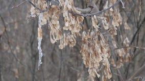 Der Anfang des Frühlinges ein Eiszapfen, der an einem Baum hängt stock video