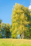 Der Anfang des Herbstes Lizenzfreie Stockfotografie