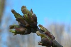 Der Anfang des Lebens des natürlichen Frühlinges Stockbilder
