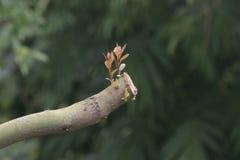 Der Anfang von neue Blätter Stockfotos