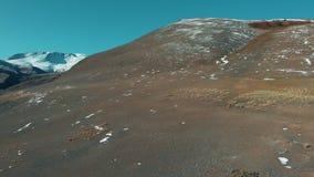 Der Argali die Bergschafe, Schafe ist auf einem Bergabhang Nationalpark Saylyugemsky Vogelperspektive 4K stock footage