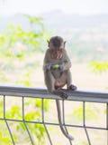 Der asiatische Affe des Babys, der neues friut isst, sitzen auf der Bahnbrücke Stockfoto