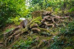 Der aufgeregte Baum Lizenzfreie Stockfotos