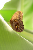 Der Aufstieg eines Schmetterlinges Stockbild