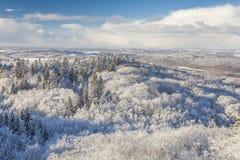 Der Aussichtsturm auf einem Hügel im Winterwald Stockbilder