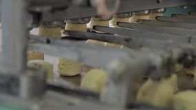 Der Bäckereiautomat teilt in den Teig für Kekse unter stock video