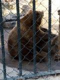 Der Bär stockbild