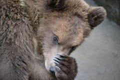 Der Bär Lizenzfreie Stockfotografie