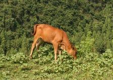 Der Büffel in Guilin, Porzellan Stockfotografie