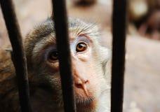 Der Baby Affe Lizenzfreie Stockbilder