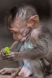 Der Baby Affe Stockfoto
