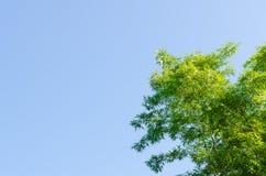 Der Bambusbaum und der blaue Himmel stockbild