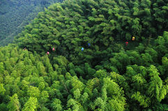 Der Bambuswald in SüdSichuan Lizenzfreie Stockbilder