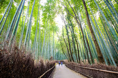 Der Bambuswald von Kyoto, Japan Stockfotos