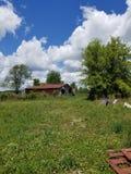 Der Bauernhof Stockfotos