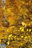 der Baumüberdachung im Herbst oben betrachten Stockbild