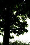 Der Baum. Stockfotografie