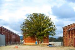 Der Baum lizenzfreie stockbilder
