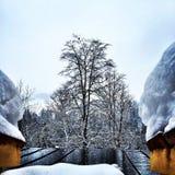 Der Baum Stockbilder