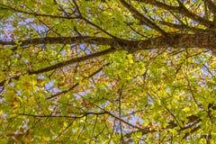 Der Baum Stockbild