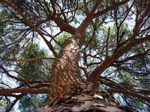 Der Baum Stockfotos