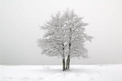 Der Baum abgedeckt mit Hoarfrost stockfotografie