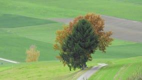 Der Baum allein Lizenzfreies Stockfoto