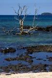 Der Baum Andilana Strandes Stockbild
