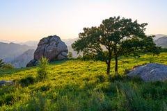 Der Baum auf dem Alpenwiesesonnenuntergang Stockfoto
