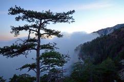 Der Baum auf dem Bergabhang in Krim unter dichtem Nebel bei Sonnenuntergang Stockfoto