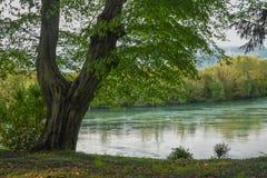 Der Baum auf dem Fluss Lizenzfreies Stockfoto