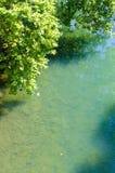 Der Baum auf dem Ufer Lizenzfreie Stockfotografie