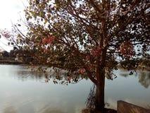 Der Baum auf der Bank von einem See Stockfoto