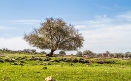 Der Baum auf einer grünen Wiese Stockfoto
